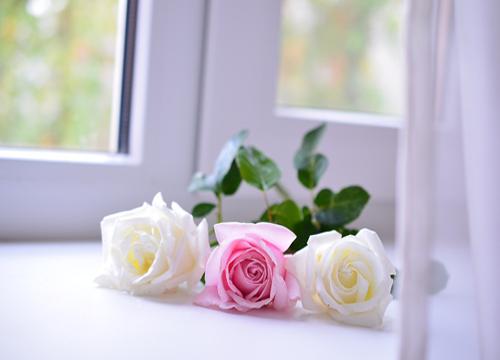розы-на-окне N