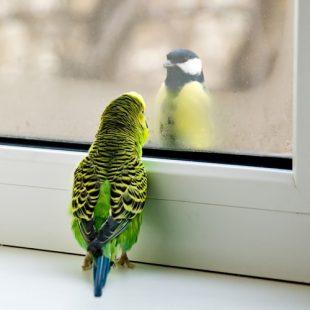 """окно """"зима-лето"""""""